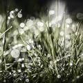 Ráno v trávě