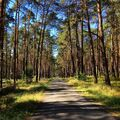 Bzenecký les II.