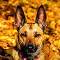 Podzimní pes