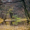 Podzimní koryto