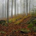 Za podzimní mlhou