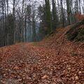 Mám rád cestu lesní....