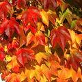 Podzim úžasný malíř.