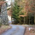 Lesní cesta :)