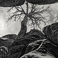 """"""" Navzdory""""    Z cyklu """" Stromy v krajině"""""""