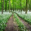-Bielym lesom-