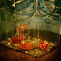 Moje akváriové rybičky