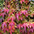 Podzimní tapeta