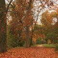 Podzimní cestičkou