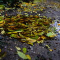 Kaluž plná podzimu