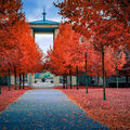 Lidice podzim