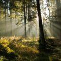 Keď sa les prebúdza