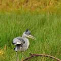 Vodní ptactvo
