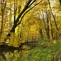 Lesní jezero I.