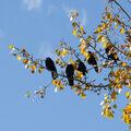 Notová osnova v podzimním hávu