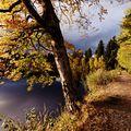 Velkopařezitý rybník (Telečsko)