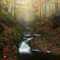 Černohorák v mlze