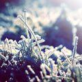 Zimní mrazík