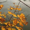 Zlatý podzim
