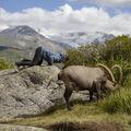 Pastva na Emosonově přehradě
