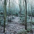 Zimní les