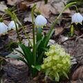 Jaro v Krkonoších