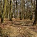 ...jarní lužní les...