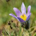 Přelet nad jarním květem