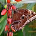 Výstava motýlů