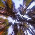 Relax v lese