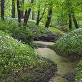 Jaro v Polaneckém lese