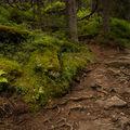 Po lese, v lese