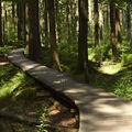 Lesní cestička