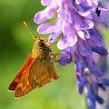 Motýlí sosání 5