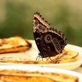 Motýlí sosání 6