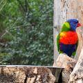 Papoušek z pražské zoo