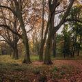 Rano v parku