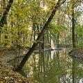 Lesní jezero II.