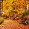Podzim kolem nás