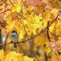 V jesennom objatí