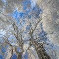 Zimní kontrasty