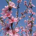 Přivolávání jara...