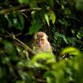 Ukrytý v deštném pralese