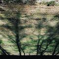 Stromořadí