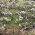 Čerešňové sady na Brdárke
