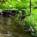 Potok v Českém lese