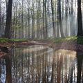 Ráno v lužním lese