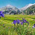 Léto v Pyrenejích