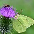 Moucha a motýl