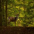 Ve stínu lesa